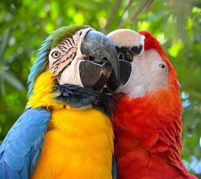 Photograph - Tropical Kisses by Richard Bryce and Family