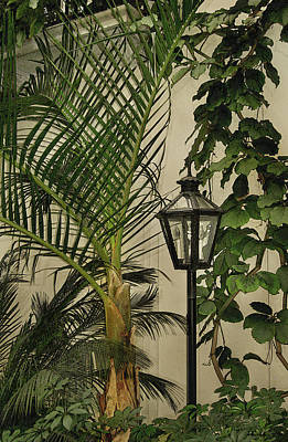 Photograph - Tropical Lamppost by Gordon Beck