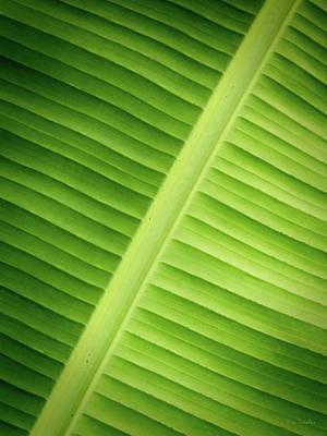 Photograph - Tropical Leaf by Wim Lanclus