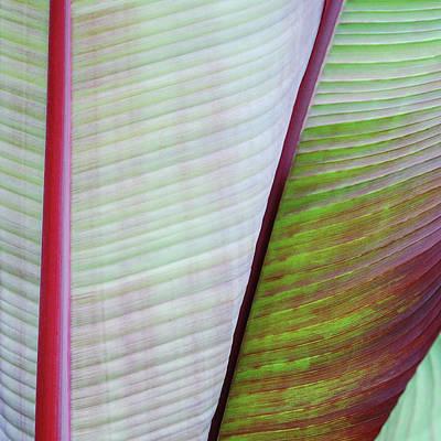 Tropical Leaves No 5  2009 Art Print by Joseph Duba