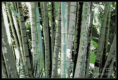 Photograph - Tropical Lines  by Carol Groenen