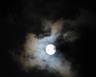 Photograph - Tropical Moon  by Diane Height