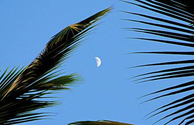 Photograph - Tropical Moon by Robert Meyers-Lussier