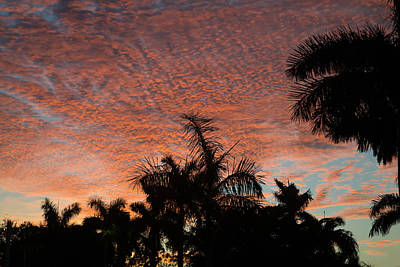 Palm Tree Photograph - Tropical Morning by J Darrell Hutto