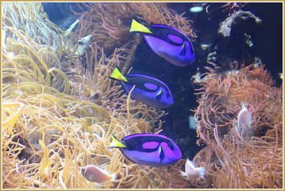 Tropical Neon Fish And Sea Anemones Original by Dora Sofia Caputo Photographic Art and Design