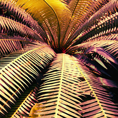 Photograph - Tropical Night Delight - Nature Photo Art by Ann Powell