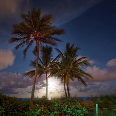 Photograph - Tropical Nights by Mark Andrew Thomas