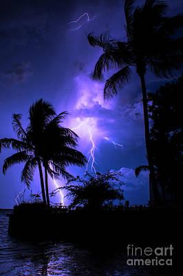 Photograph - Tropical Nights by Quinn Sedam