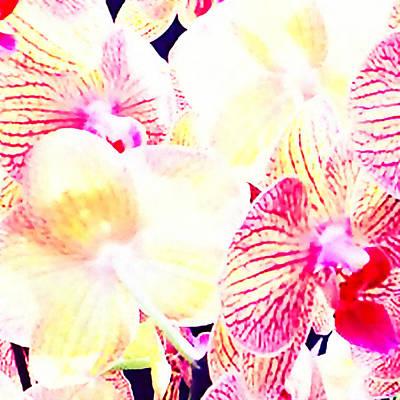 Timeless Mixed Media - Tropical Orchid  by Stacey Chiew