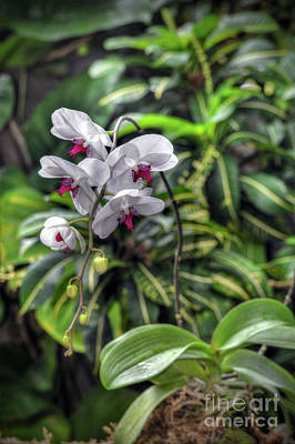 Photograph - Tropical Orchids by Savannah Gibbs