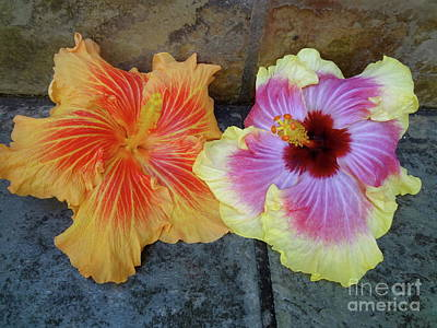 Photograph - Tropical Pair by Jenny Lee