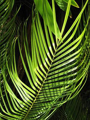Art Print featuring the photograph Tropical Palm by Carol Sweetwood