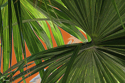 Tropical Palms 2 Art Print by Frank Mari