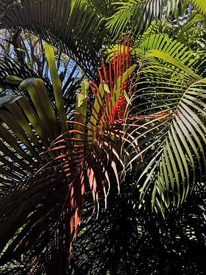 Photograph - Tropical Palms by Kay Gilley