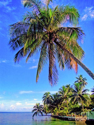 Photograph - Tropical Palms by Sue Melvin