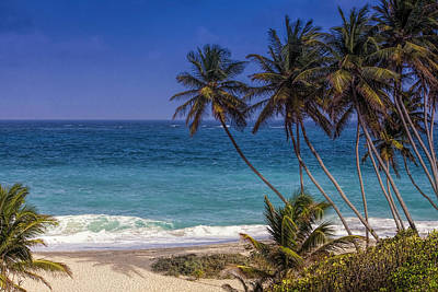 Barbados Photograph - Tropical Paradise by Andrew Soundarajan