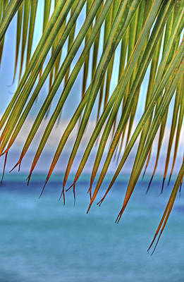 Abstract Beach Landscape Photograph - Tropical Paradise by Kelly Wade