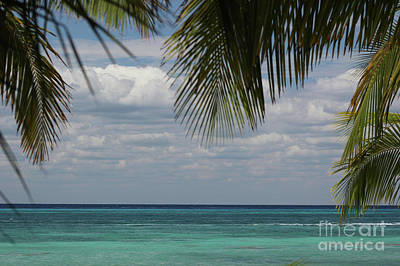 Photograph - Tropical Paradise by Wilko Van de Kamp
