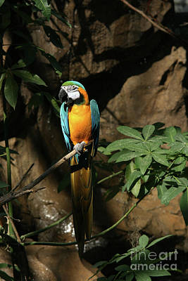Photograph - Tropical Parrot #2 by Judy Whitton