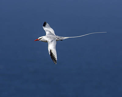 Photograph - Tropical Pelagic by Tony Beck