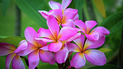 Photograph - Tropical Pink Plumeria by Lynn Bauer