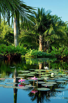 Photograph - Tropical Pond by Brian Jannsen