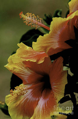 Art Print featuring the photograph Tropical Punch by Lori Mellen-Pagliaro