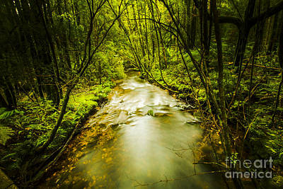 Tropical Rainforest Stream Art Print