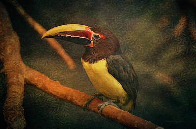 Toucan Digital Art - Tropical Rainforest Toucan  by Maria Angelica Maira