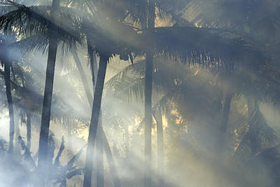 Photograph - Tropical Rays by Michele Burgess