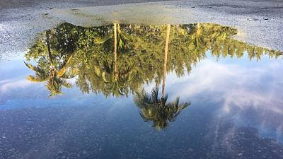 Photograph - Tropical Reflections Delray Beach Florida  by Lawrence S Richardson Jr