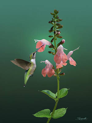 Digital Art - Tropical Sage And Hummingbird by IM Spadecaller