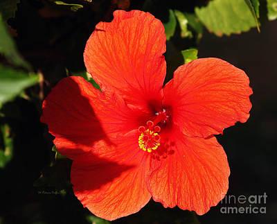 Photograph - Tropical Splendor by Patricia Griffin Brett