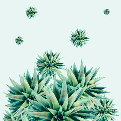 Tropical Stars  Print by Mark Ashkenazi
