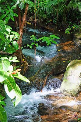 Photograph - Tropical Stream by Pamela Walton