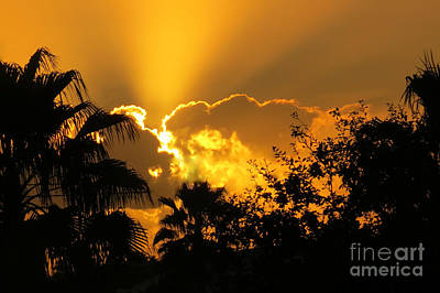 Photograph - Tropical Sun by Frank Townsley