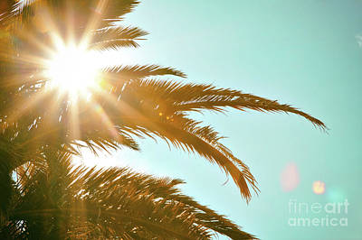 Photograph - Tropical Sun Palm Tree by Jan Brons