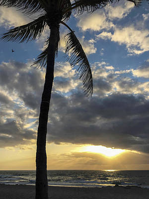 Photograph - Tropical Sunrise by Arlene Carmel