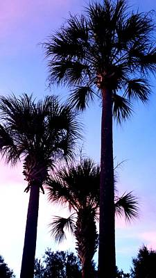 Photograph - Tropical Sunset by Kenny Glover