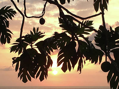 Photograph - Tropical Sunset Silhouette by Karen Nicholson