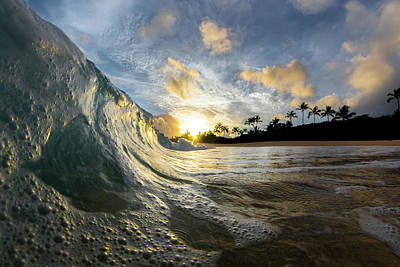 Photograph - Tropical Tickle by Sean Davey