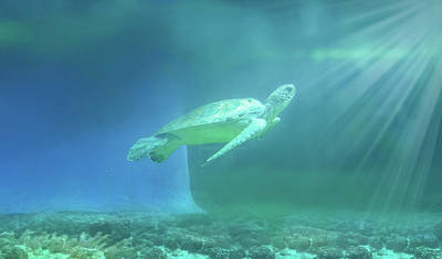 Tropical Photograph - Tropical Tortoise Swimming Underwater  by Art Spectrum