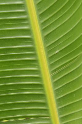 Photograph - Tropical Tracks by Christi Kraft
