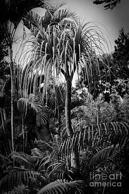 Photograph - Tropical Trees by Sharon Mau
