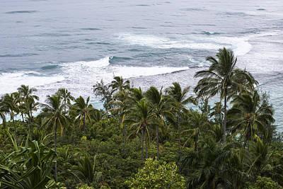 Photograph - Tropical Vegetation by Robert Potts