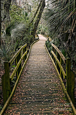 Susan M. Smith Photograph - Tropical Walk by Susan Smith