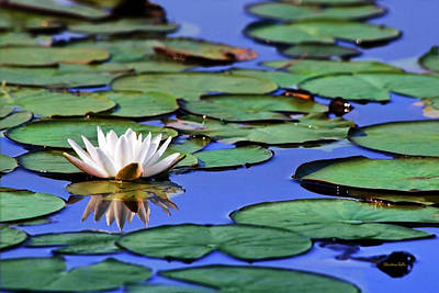 Photograph - Tropical Water Lily by Christina Rollo