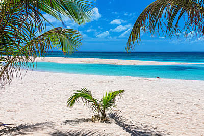 Photograph - Tropical White Sand Beaches Vacation View by James BO Insogna