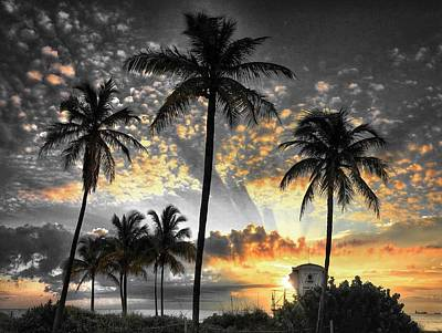 Photograph - Tropically, Black And Gold. by Andrew Royston