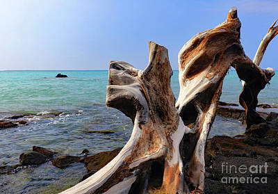 Photograph - Tropically Weathered II by Mary Haber